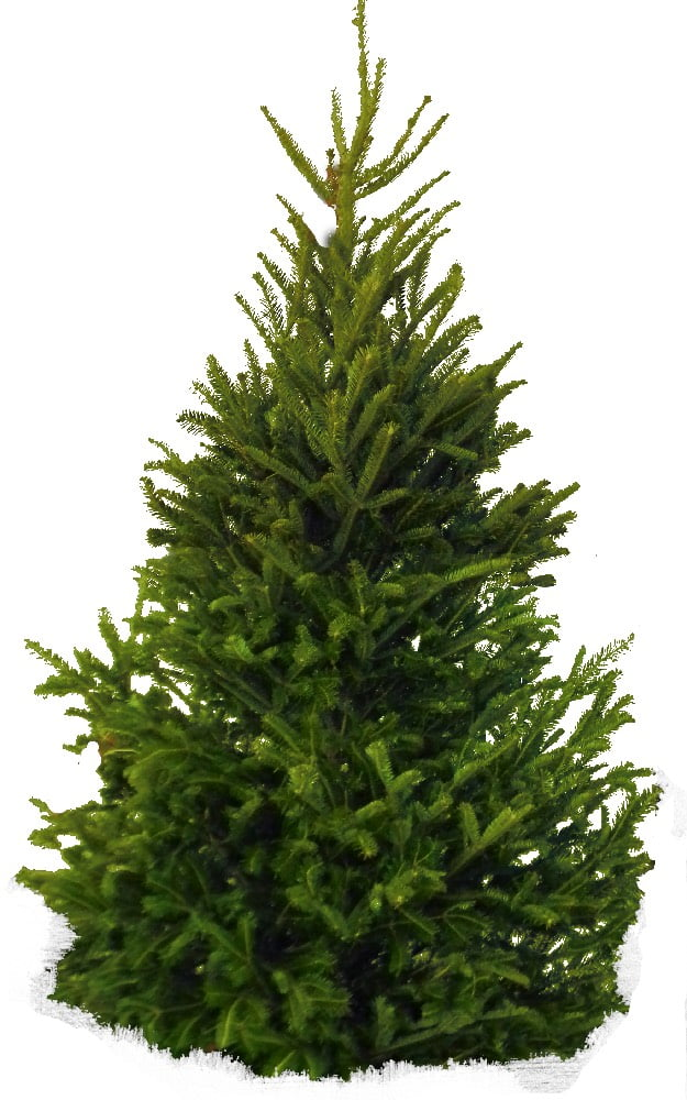 Dzień Drzewa - Dekoracje 3 Dzień Drzewa Dzień Lasu Październik Święta i pory roku