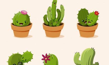 Walentynkowy kaktus