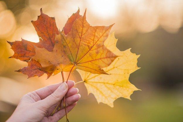 Wrzesień i Jesień