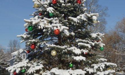 Zima – drzewo