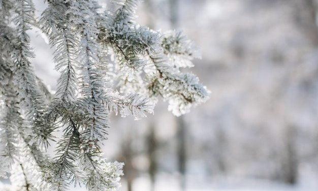 Zagadka – Zima