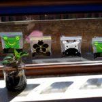 Praca grupowa – Zasadziliśmy fasolę