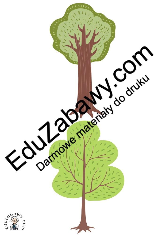Dzień Drzewa: Domino / Memory (13 kart pracy) Domino / Memory Dzień Drzewa Karty pracy Karty pracy (Dzień drzewa)