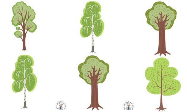 Dzień Drzewa: Domino (13 kart pracy)