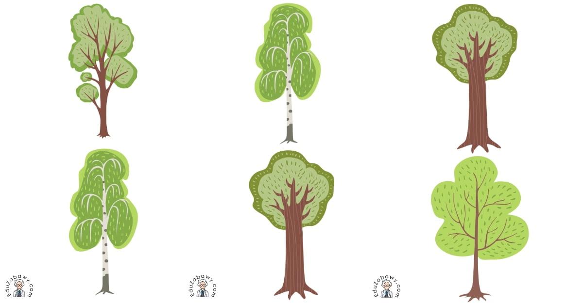 Dzień Drzewa: Domino / Memory (13 kart pracy)