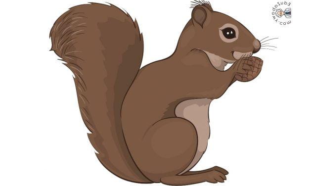 Dekoracje: Wiewiórki (10 szablonów)