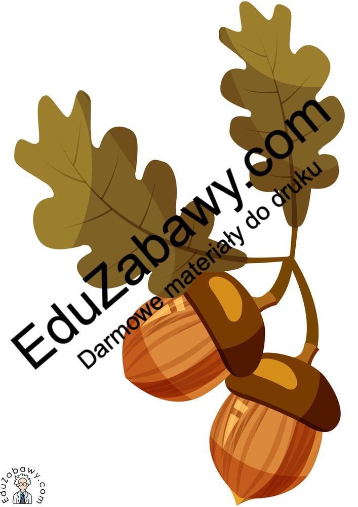 Dekoracje: Kasztany i żołędzie (7 szablonów) Dekoracje Dekoracje (Jesień)